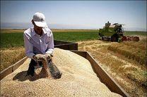 خرید ۳۵۱ هزار تن گندم از گندم کاران کرمانشاه