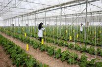 اجرای 2500 هکتار طرح توسعه شهرک های گلخانه ای در اردبیل
