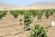 اردبیل موفقترین مناطق کشاورزی کشور است