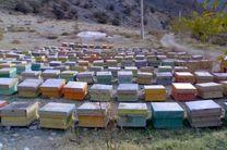 تاکنون 17 تن عسل از زنبورستان های گیلانغرب جمعآوریشده است