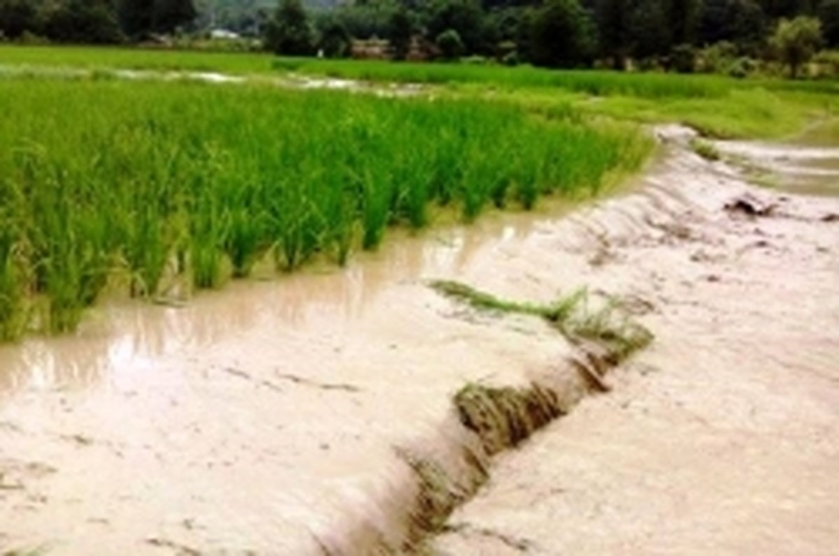 خسارت 48 میلیاردی سیلاب و تگرگ به مزارع شهرستان آران و بیدگل