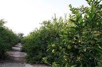 آغاز اجرای طرح تجمیع ۸۰۰ هکتار از باغهای هرمزگان