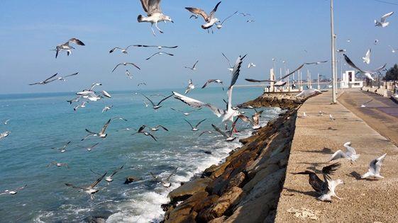 پایداری وضعیت جوی و دریایی هرمزگان