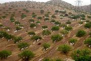 ثبت منابع طبیعی مانع از توسعه زمین خواری اراضی دولتی است