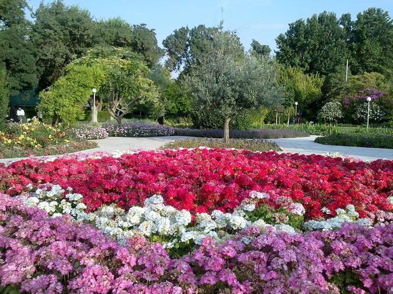 جشنواره گلهای لاله در باغ گلهای اصفهان برگزار می شود