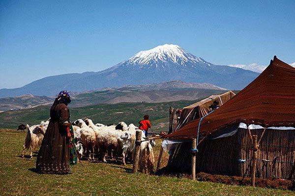 سالانه حدود یک میلیون و 300 هزار واحد دامی عشایر به مناطق ییلاقی مازندران کوچ می کنند