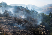 آتش سوزی پوشش جنگلی مله کوه رومشکان مهار شد