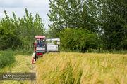 سیاست عدم حمایت از کشت برنج در کشور پیگیری می شود