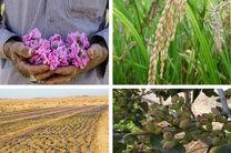 لزوم رفع ابهامات بخشنامه بانک مرکزی برای بخشش سود وام کشاورزان
