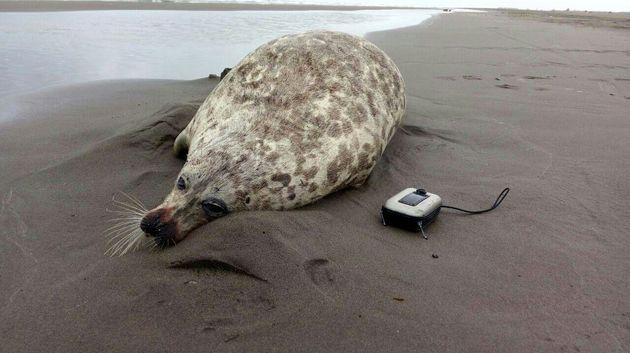 کشف لاشه یک قلاده فک در ساحل پارک ملی بوجاق کیاشهر