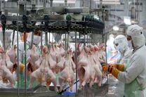 ثبت فرآیند تولید گوشت مرغ در سامانه جامع تجارت الزامی است