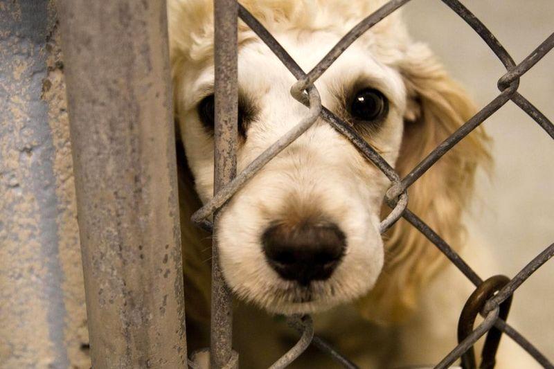 لایحه قانون حمایت از حیوانات در راه مجلس