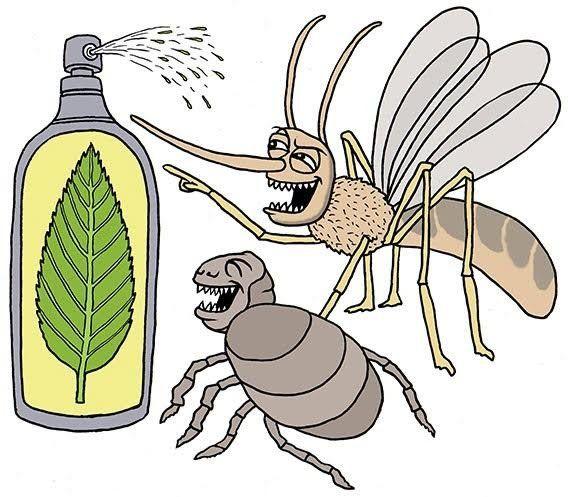 پشهها به مواد دفعکننده حشرات توجهی نمیکنند