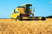پیش بینی برداشت 700 تن گندم در شهرستان خوروبیابانک