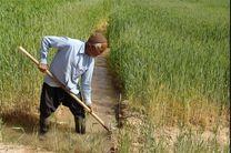 کاهش ۲۰ هزار هکتاری کشت گندم در استان اصفهان