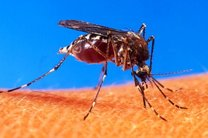 محققان به دنبال داوطلب مبتلا به ویروس زیکا هستند
