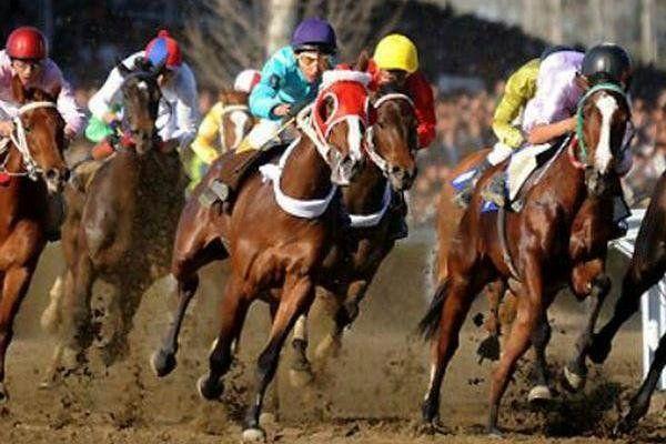 ۶۶ راس اسب در هفته هفتم کورس پاییزه گنبد رقابت میکنند