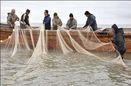 صید ماهیان استخوانی دریای خزر شروع شد