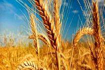 انجمن صنفی کارفرمایی تأمینکنندگان غلات کشور رسماً فعالیت خود را آغاز کرد