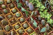 تولید 26 میلیون شاخه گل زینتی در ساری