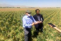 معرفی ارقام جدید گندم در آزمایشگاه غلات مرکز تحقیقات جهاد کشاورزی
