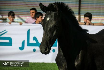 پنجمین+جشنواره+ملی+اسب+اصیل+کرد