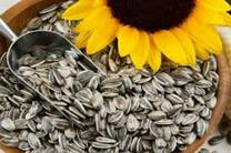 پیشبینی تولید بیش از 300 تن دانه روغنی آفتابگردان در اسلام آبادغرب