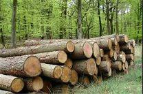 حفظ عرصههای منابع طبیعی با زراعت چوب
