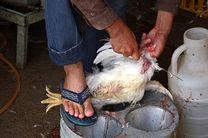 هفت واحد مرغ فروشی در همدان متهم به تقلب شدند