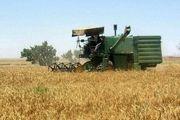 آغاز برداشت گندم در نکا