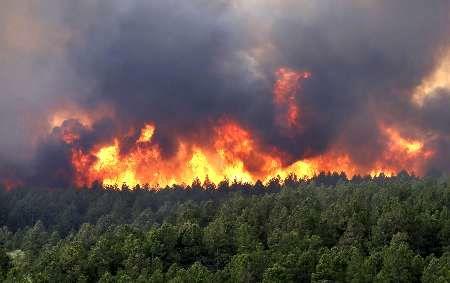 آتش سوزی جنگل روستای کهنه ده بخش کجور نوشهر مهار شد