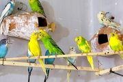کشف محموله  قاچاق پرندگان زینتی در کاشان