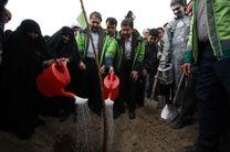 کاشت بیش از 360 هزار اصله درخت در شهر اصفهان از ابتدای سال تاکنون