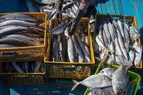 صادرات 14 هزار تن میگو/ سرانه مصرف آبزیان افزایش یافت