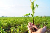 کشاورزان جهت بیمه مزارع و باغات خود اقدام کنند
