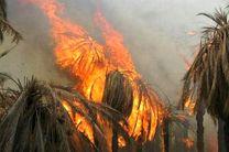 آتش سوزی درباغهای روستای توشهر احمدی
