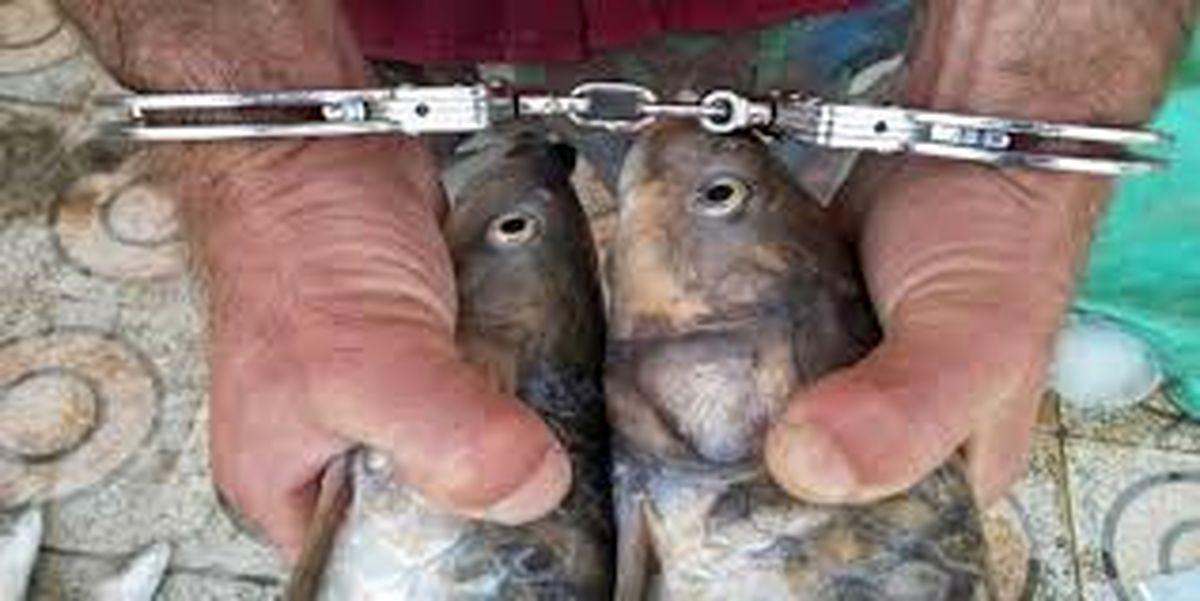 دستگیری یک متخلف صید ماهی در منطقه شکار ممنوع ونک سمیرم