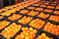 کشف بیش از یک تن میوه خارجی قاچاق در قشم