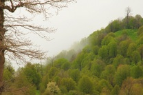 اجرای طرح تنفس جنگل در ۷ طرح جنگلداری غرب مازندران
