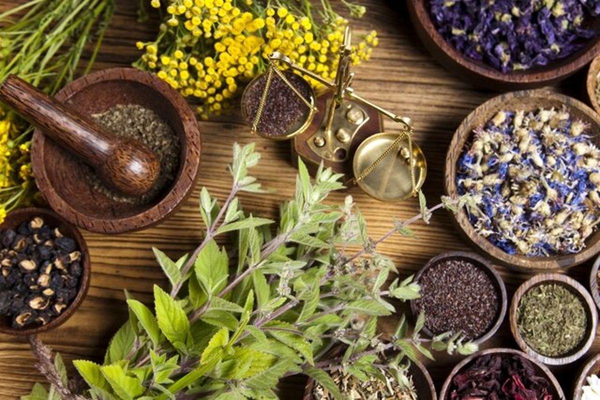 آینده کشاورزی خراسان رضوی در توسعه کشت گیاهان دارویی می باشد