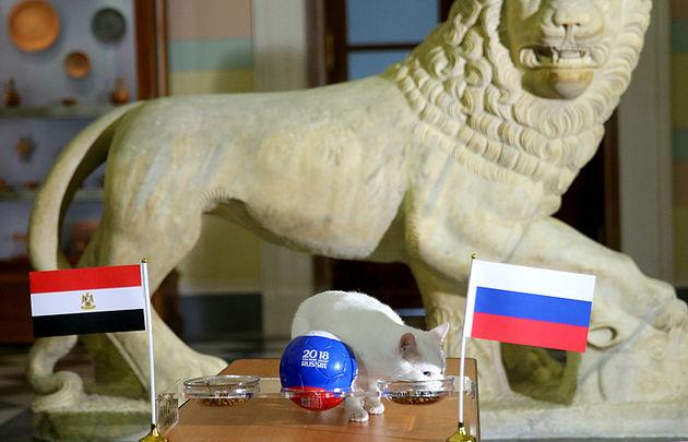 پیش بینی گربه پیشگو روسی از بازی روسیه و مصر
