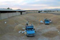 نظارت بر فرآیند خرید گندم در استان گلستان افزایش مییابد