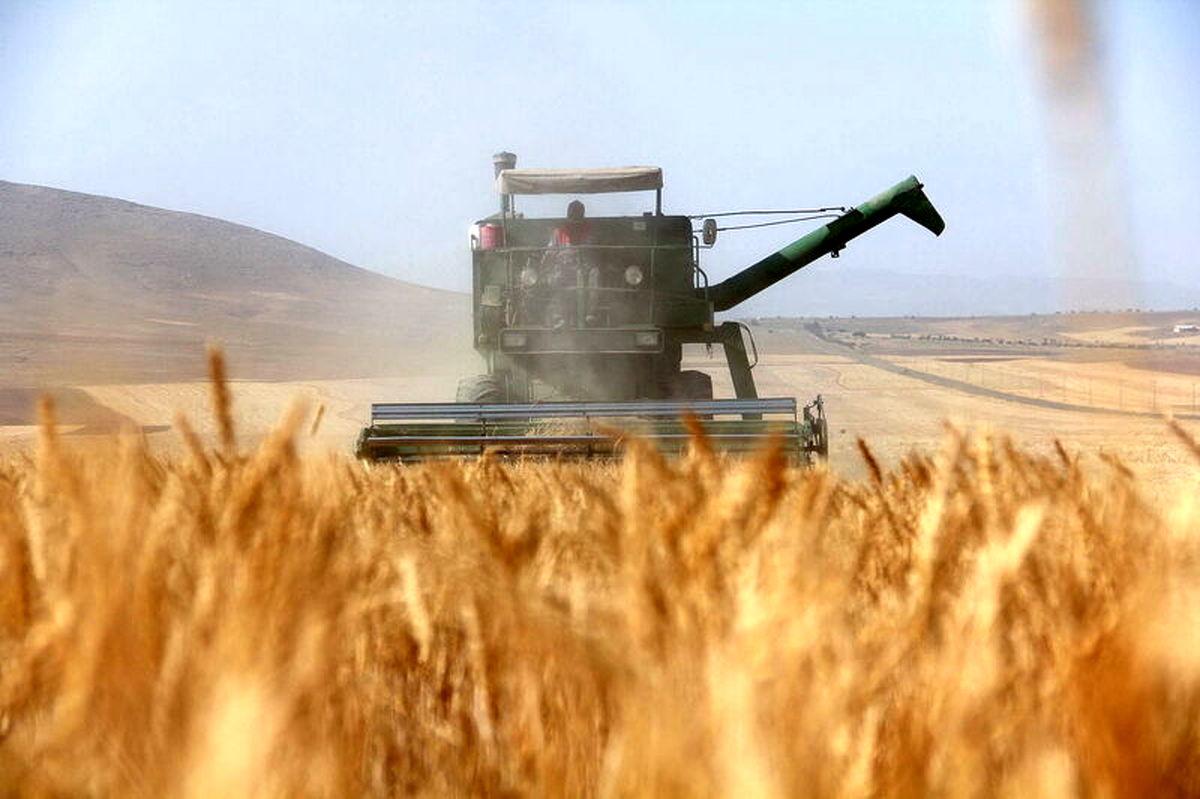 298 هزار هکتار گندم در سطح استان اردبیل کشت شده است