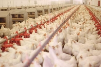 مسئولان صدور مجوز انتقال محصولات مرغداری را تسهیل کنند
