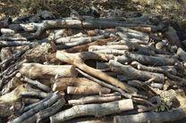 کشف 13 تن چوب قاچاق در خمینی شهر