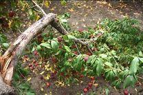 خسارت ۳۳ میلیارد تومانی خشکسالی، بلایای طبیعی و آفات به کشاورزی سبزوار