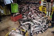 کشف 2 میلیاردی ماهی قاچاق