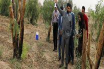 تولید چوب و کاشت درخت در زمین های بایر  زمینه اشتغال جدید برای خوزستان است