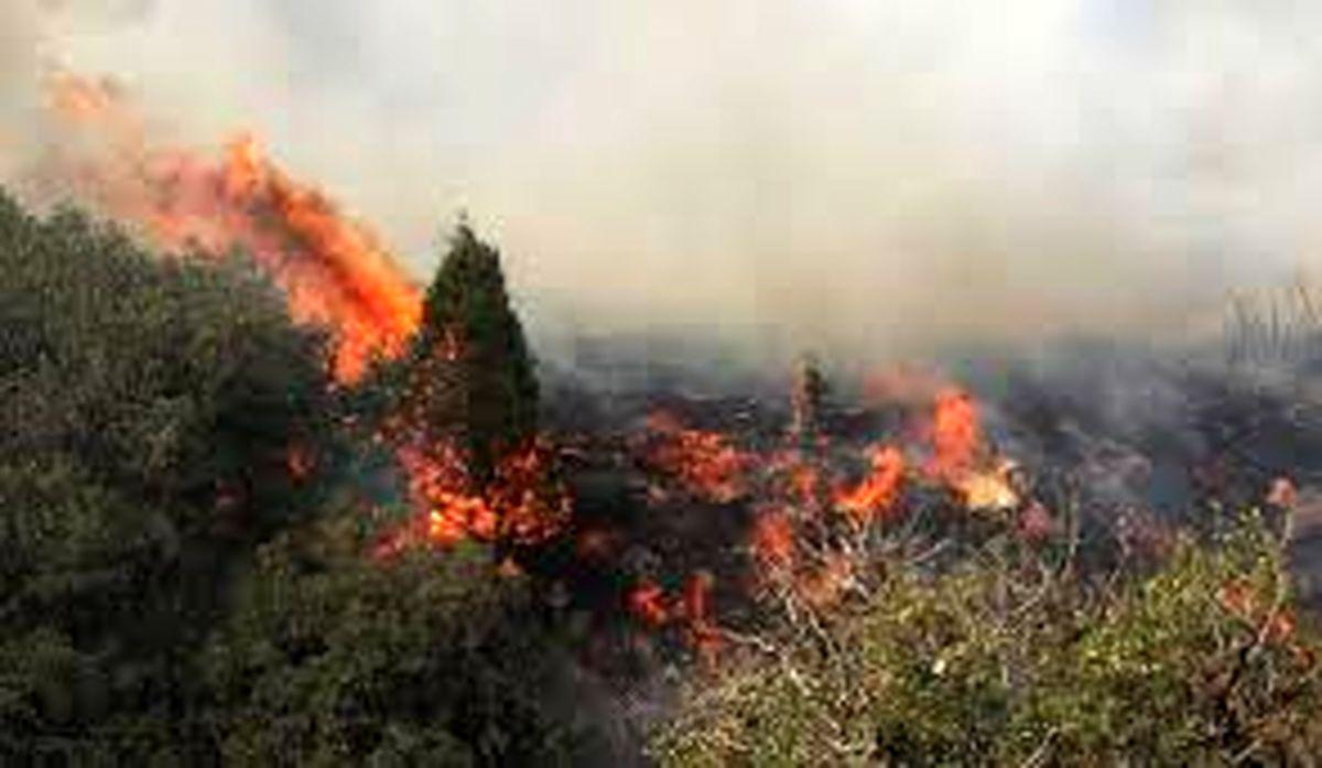 مرگ خاموش جنگل ها در سایه بی تدبیری مسئولان!