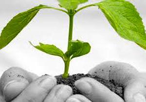 عملکرد دولت در بخش زیست محیطی بررس میشود